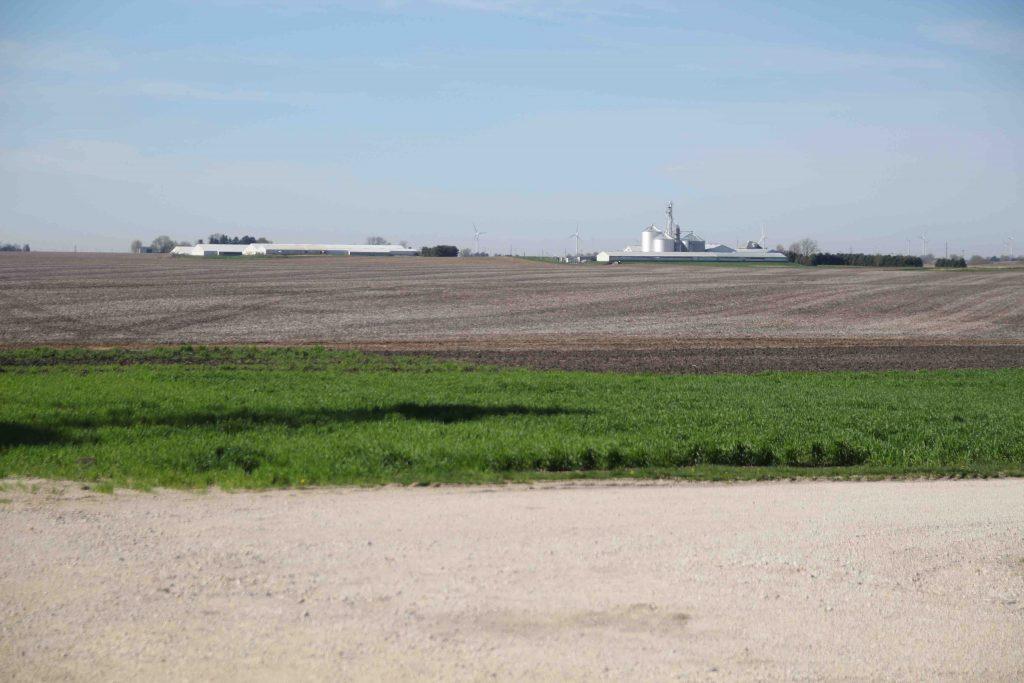 Det är enorma fält kring gården. I bakgrunden ligger grisgårdarna på rad.