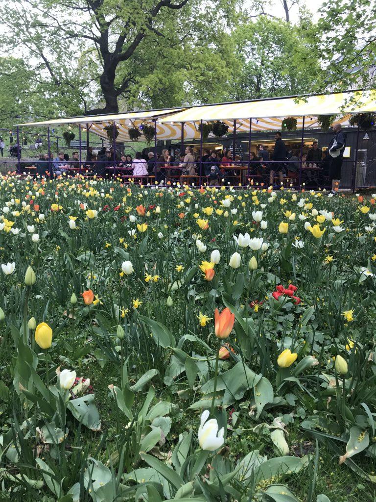 Omnipollos Flora - blommor. Foto: Joel Linderoth