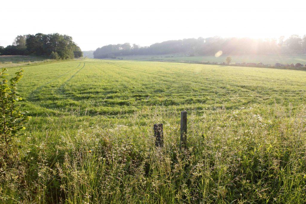 Öppna svenska landskap är en fröjd för ögat.