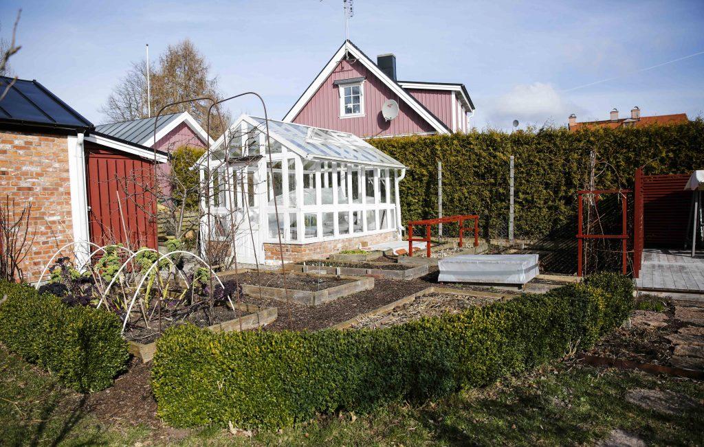Häcken har växt runt köksträdgården i tio år. Innan dess stod den framför huvudbyggnaden på föräldragården.