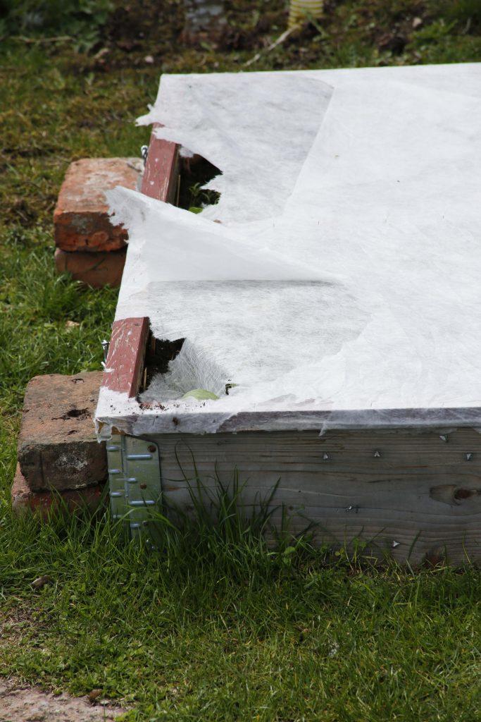 Kajorna sliter sönder hela sjok av väv och flyger vidare mot boet.