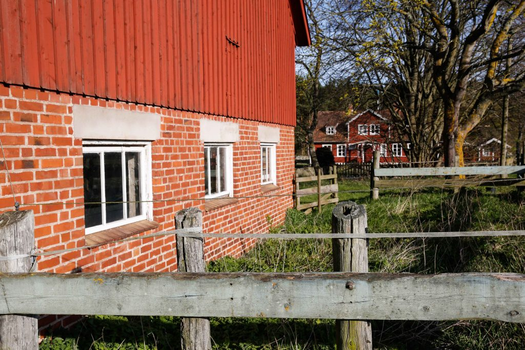 Nässlorna växer rikligt runt ladugårdar och stengärdsgårdar.