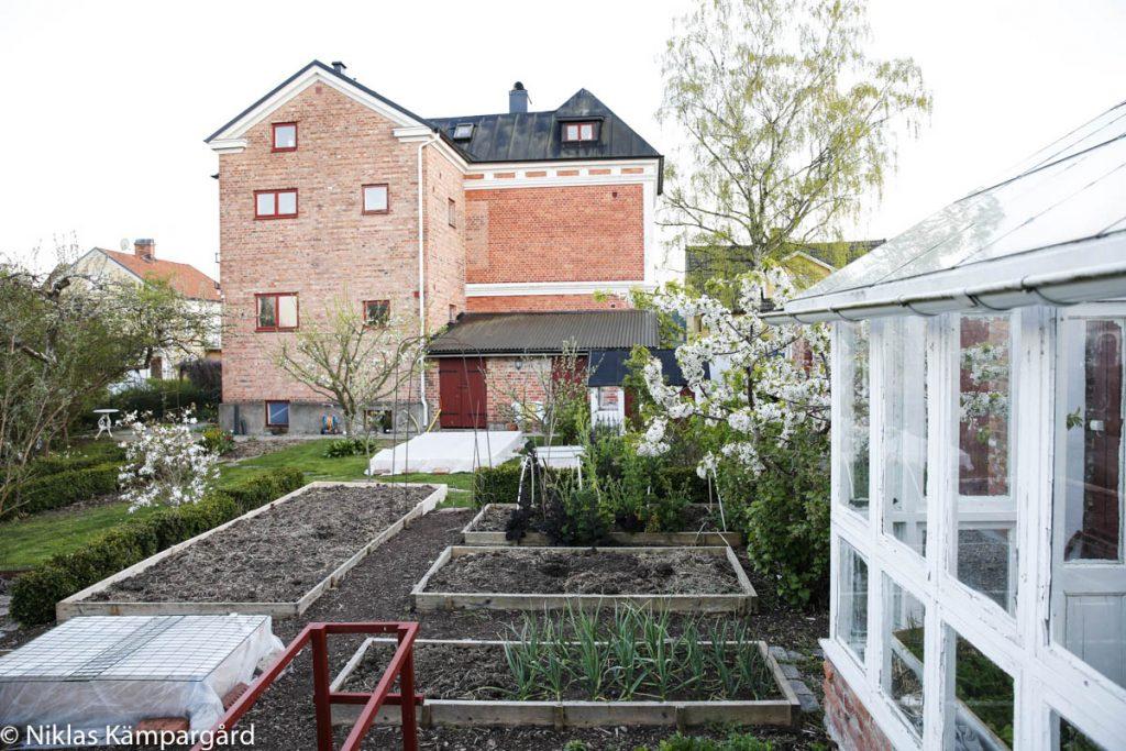 Fortfarande är det rätt tomt i köksträdgården även om det växer så det knakar under både väv och i växthuset.