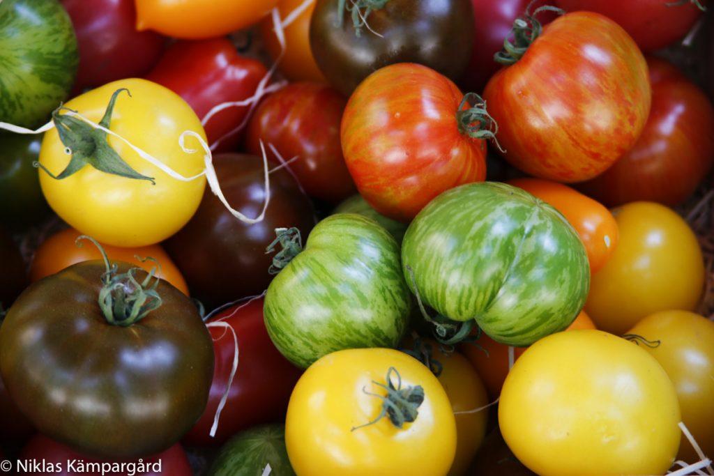 Alla tomater är ekologiska. Italienarna skulle inte komma på tanken att importera tomater från Holland. Varför gör vi det?