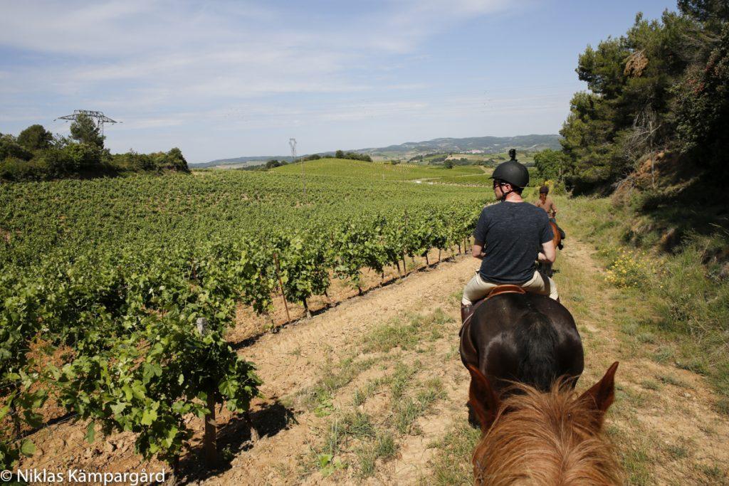 Långsamt skrittande genom ett förföriskt vackert vinlandskap.