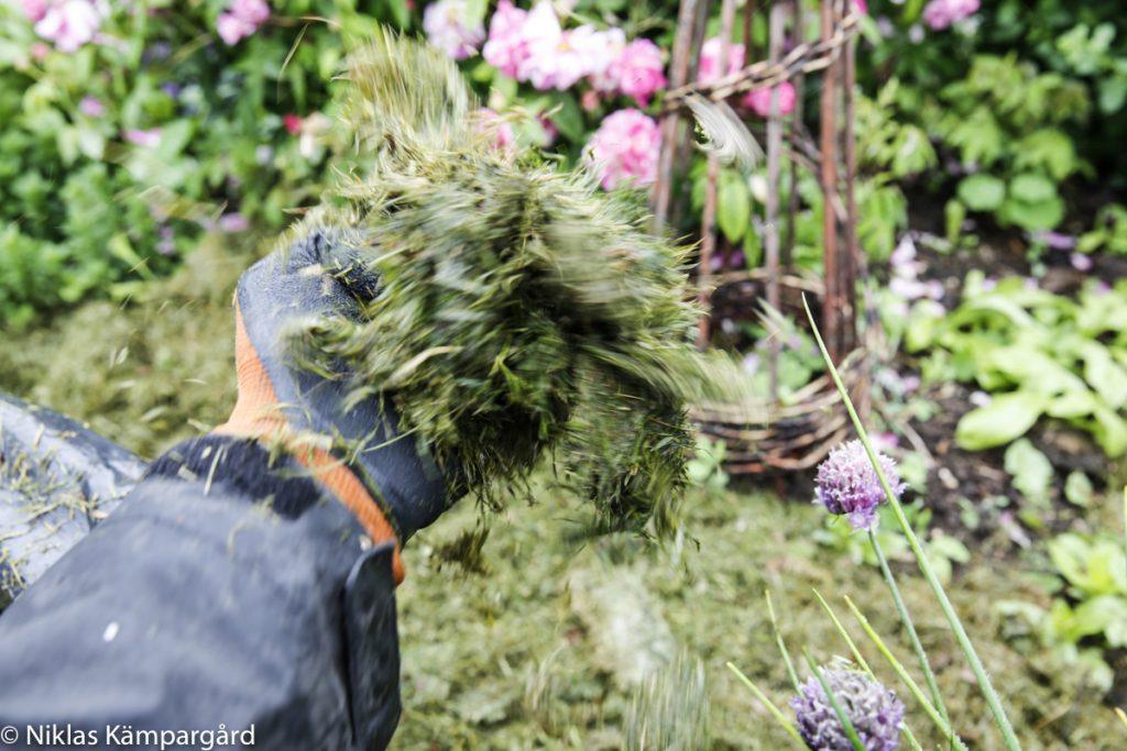 Försök att finfördela gräset så att det inte hamnar i stora tjocka klumpar runt växterna.