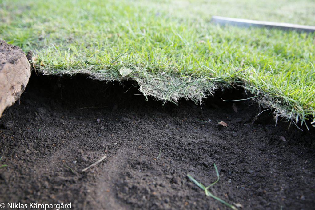Gräsmattan växer 10-20 cm rakt ut över plattorna.