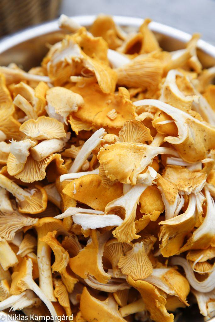 Rensa svampen som noggrant som möjligt ute i skogen.