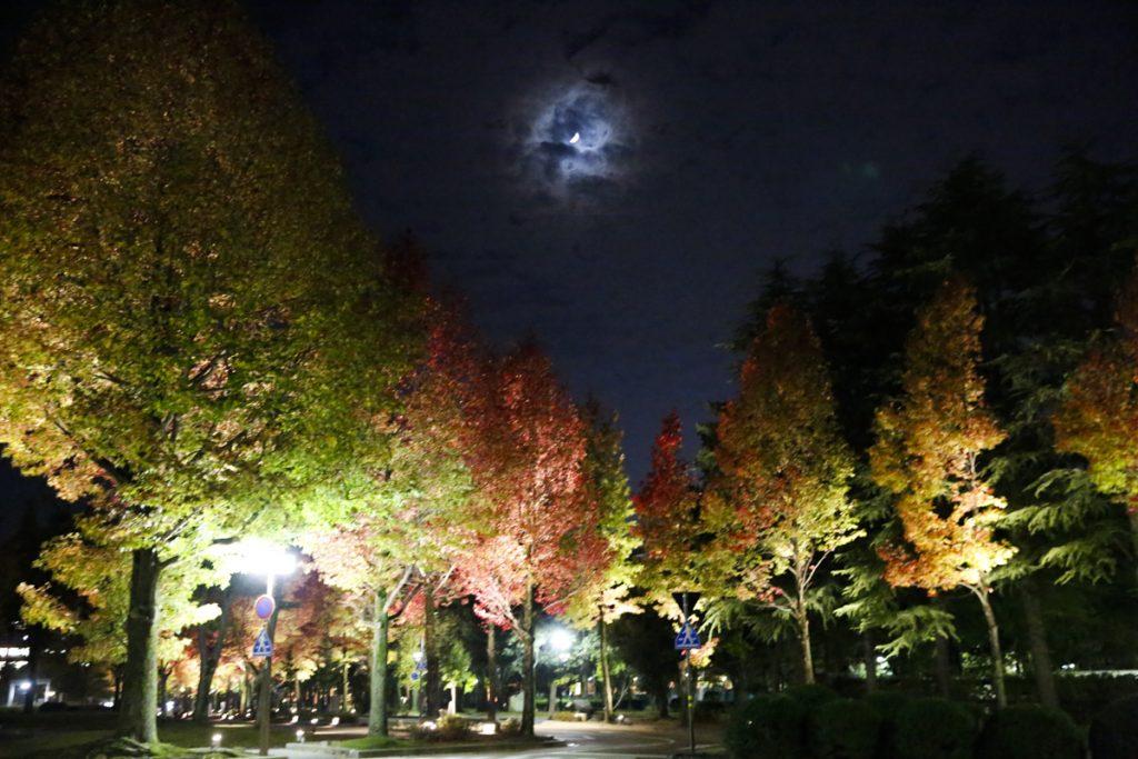 Njut av vackra lövträd i färgskalans alla nyanser.