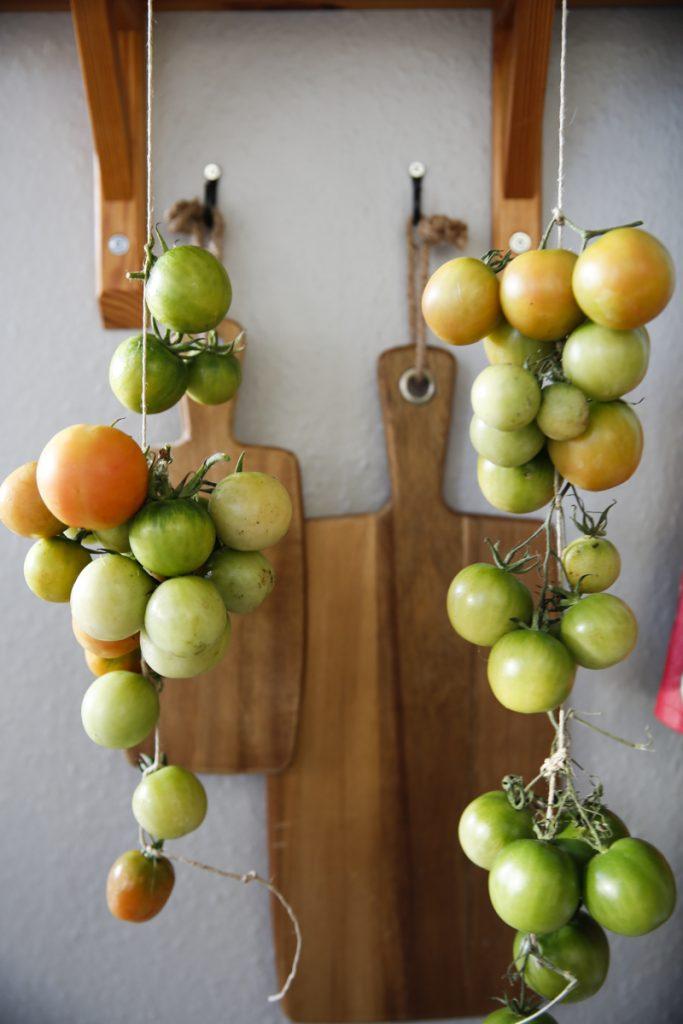 Tomaterna eftermognar under kryddhyllan i köket.