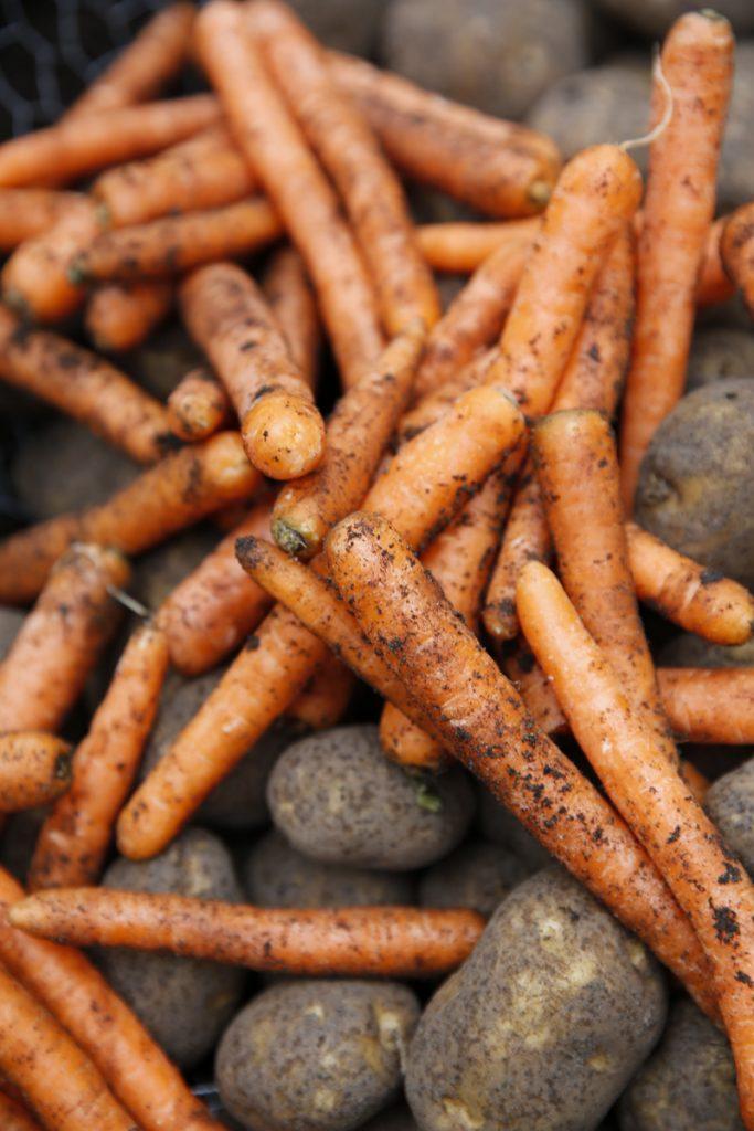 Morötter och potatis som tillbringat vintern i stuka (samma princip som rakt i marken).