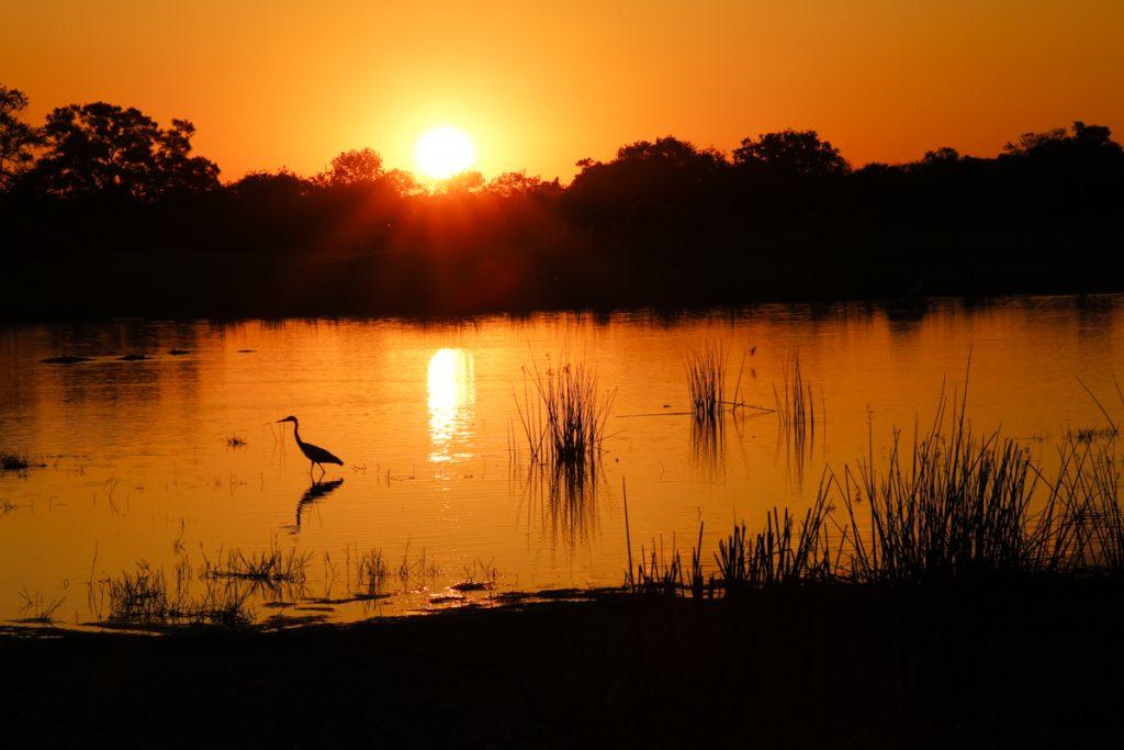 Djurlivet kring Okavangodeltat är imponerande.