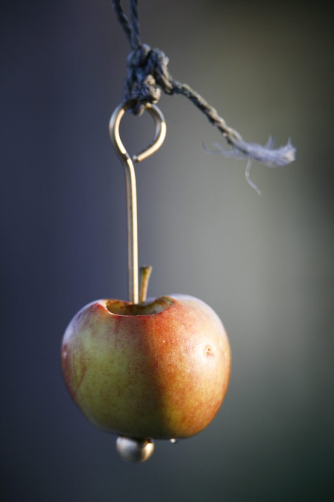 Ett helt vanligt äpple uppskattas av både rödhake och sidensvans.