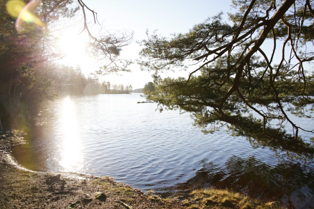 Fantastisk vinterdag (utan snö) vid Långasjön i Karlshamn.
