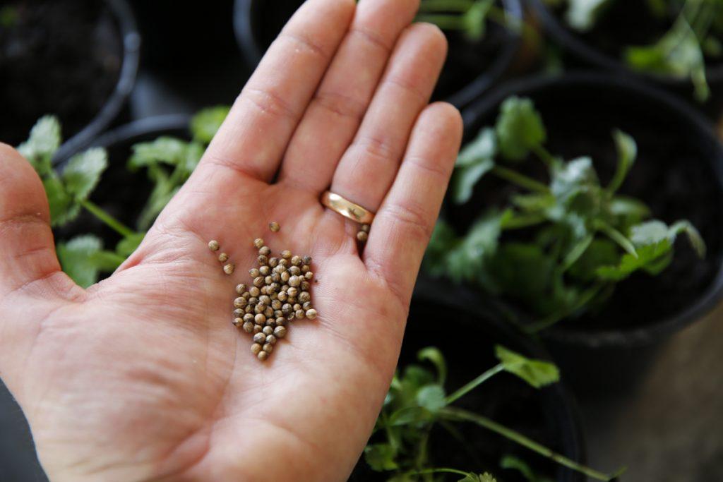 Glöm inte att så nya frön så fort du planterat om de första.