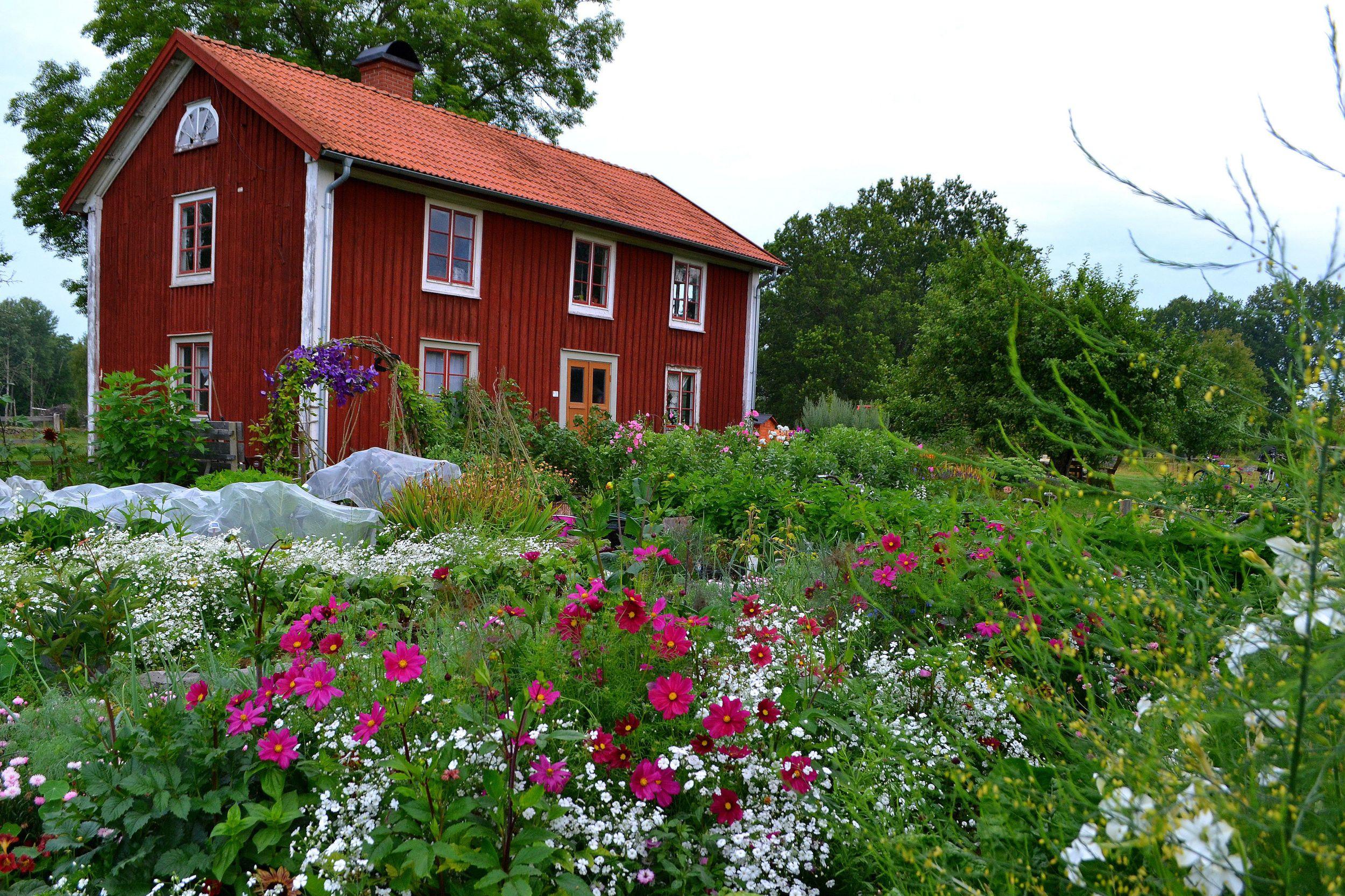 En blommande köksträdgård omger ett klassiskt småländskt parhus.