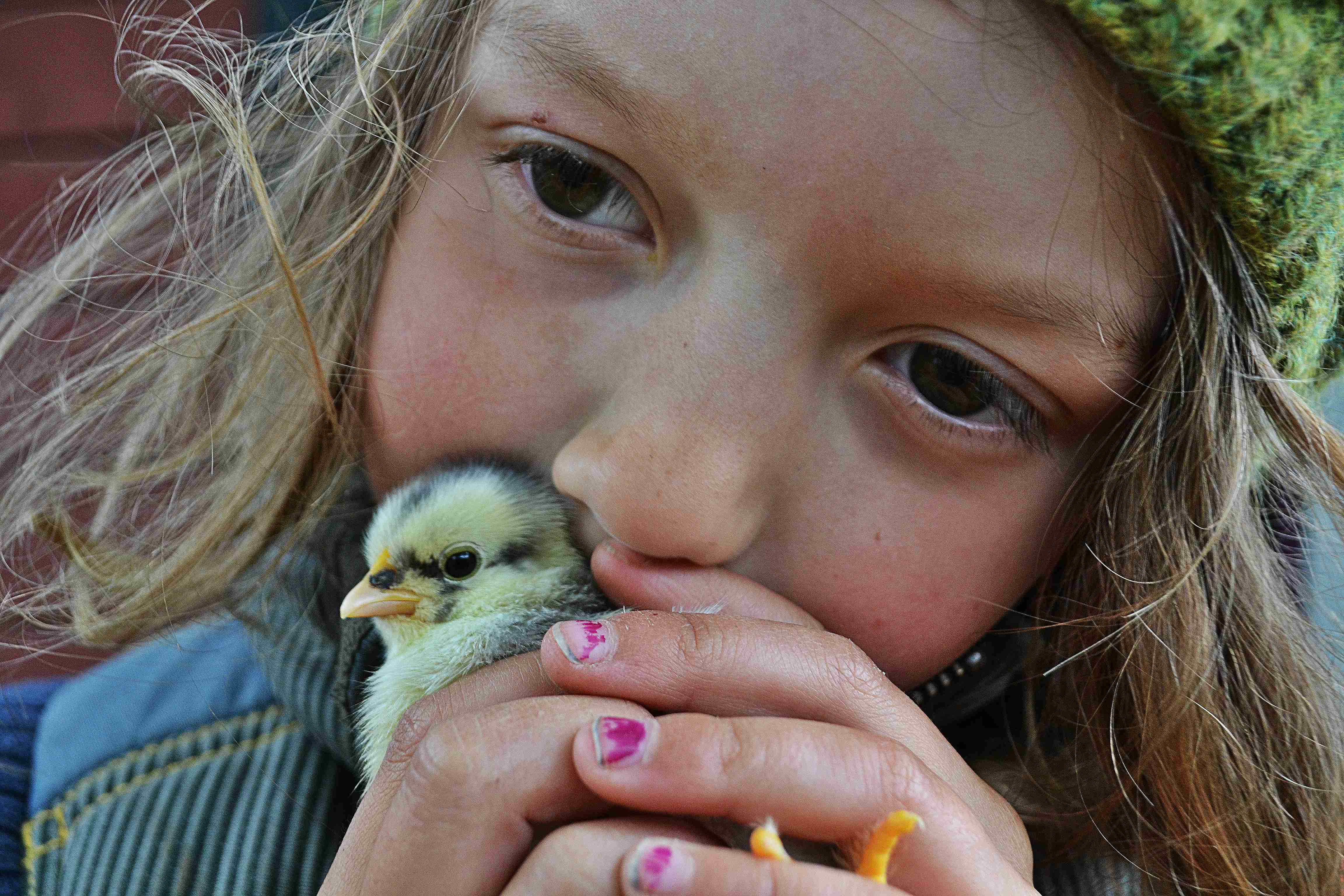 Barn gosar med kyckling