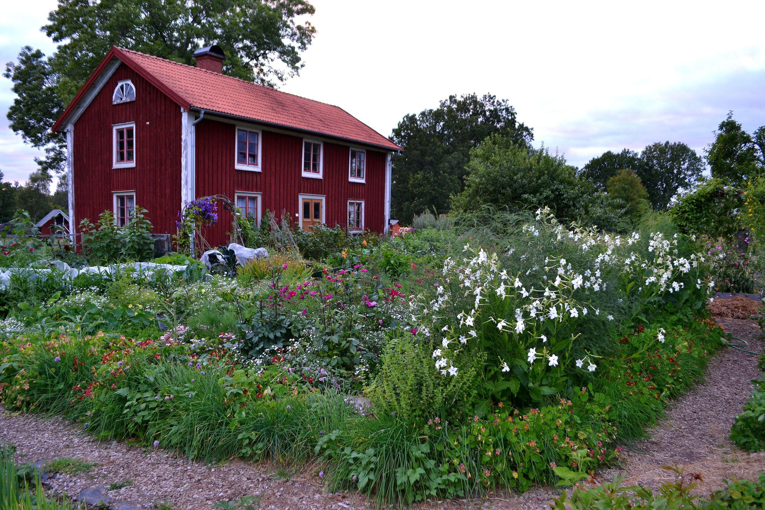 En trädgård för växter och människor  Skillnadens Trädgård ...