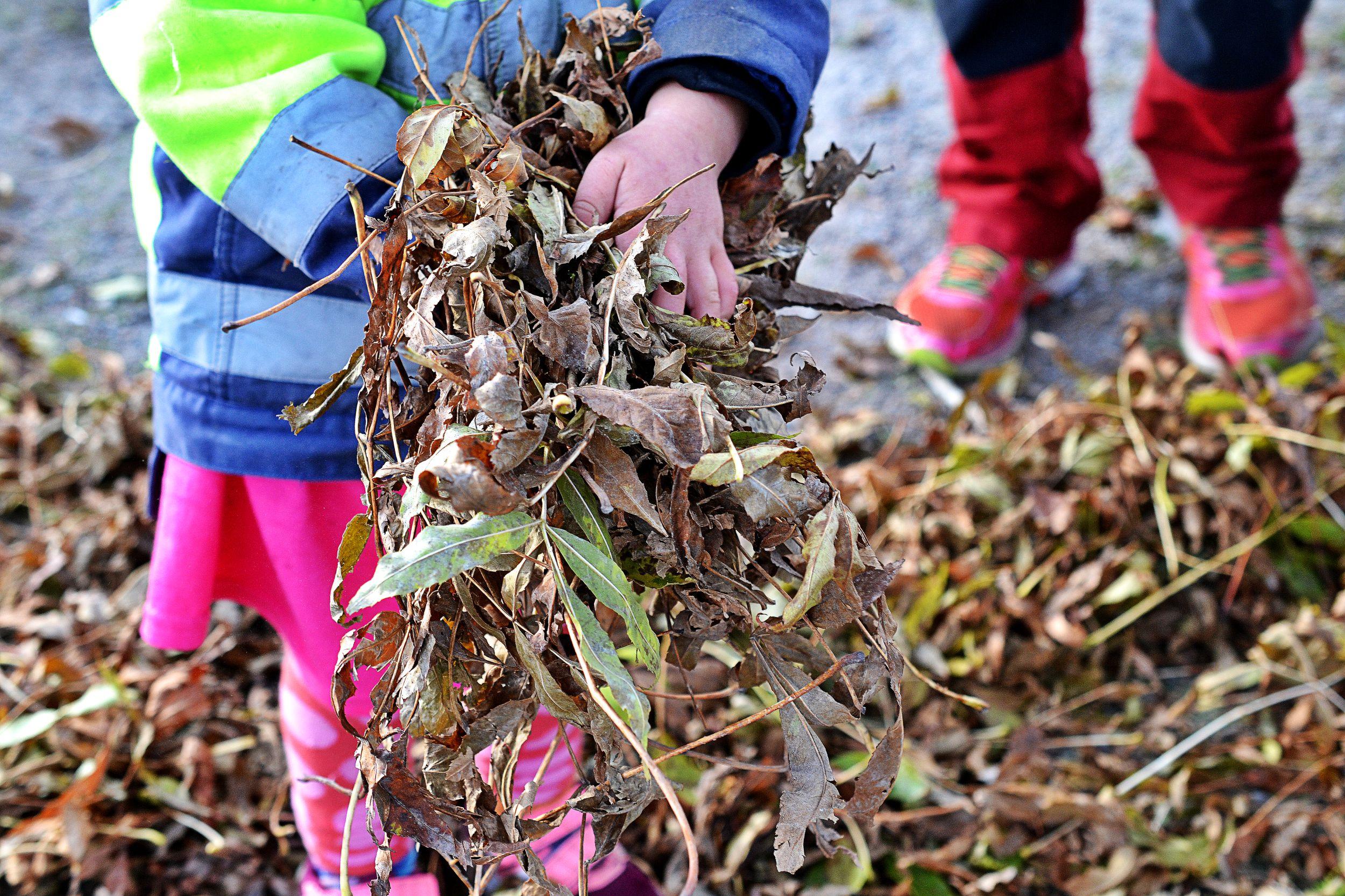 Ett barn bär löv i händerna.