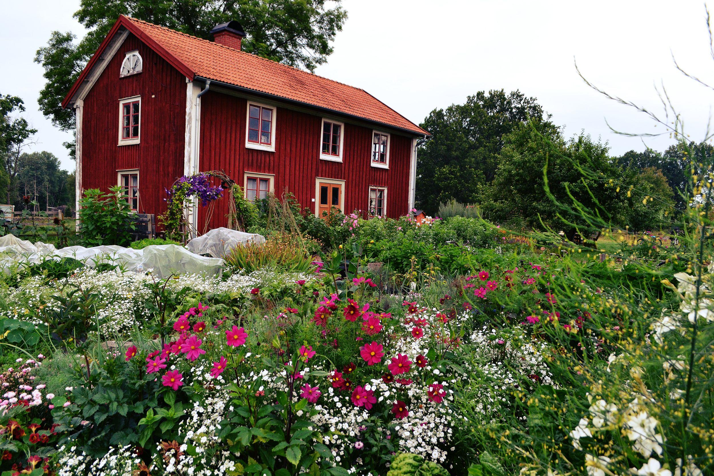 Blomsterrabatt mitt i köksträdgården, som en färgklick mitt i allt grönt.