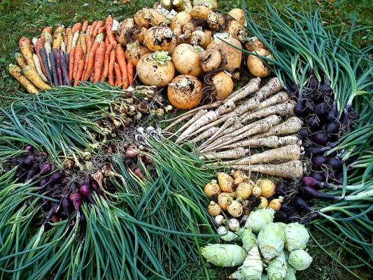 Mängder av olika grönsaker ligger på gräsmattan.