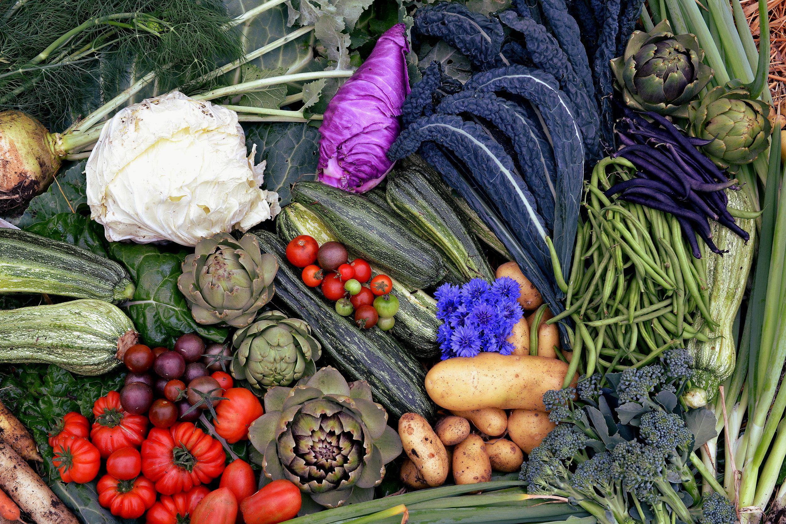 Massor av nyskördade grönsaker ligger tillsammans.