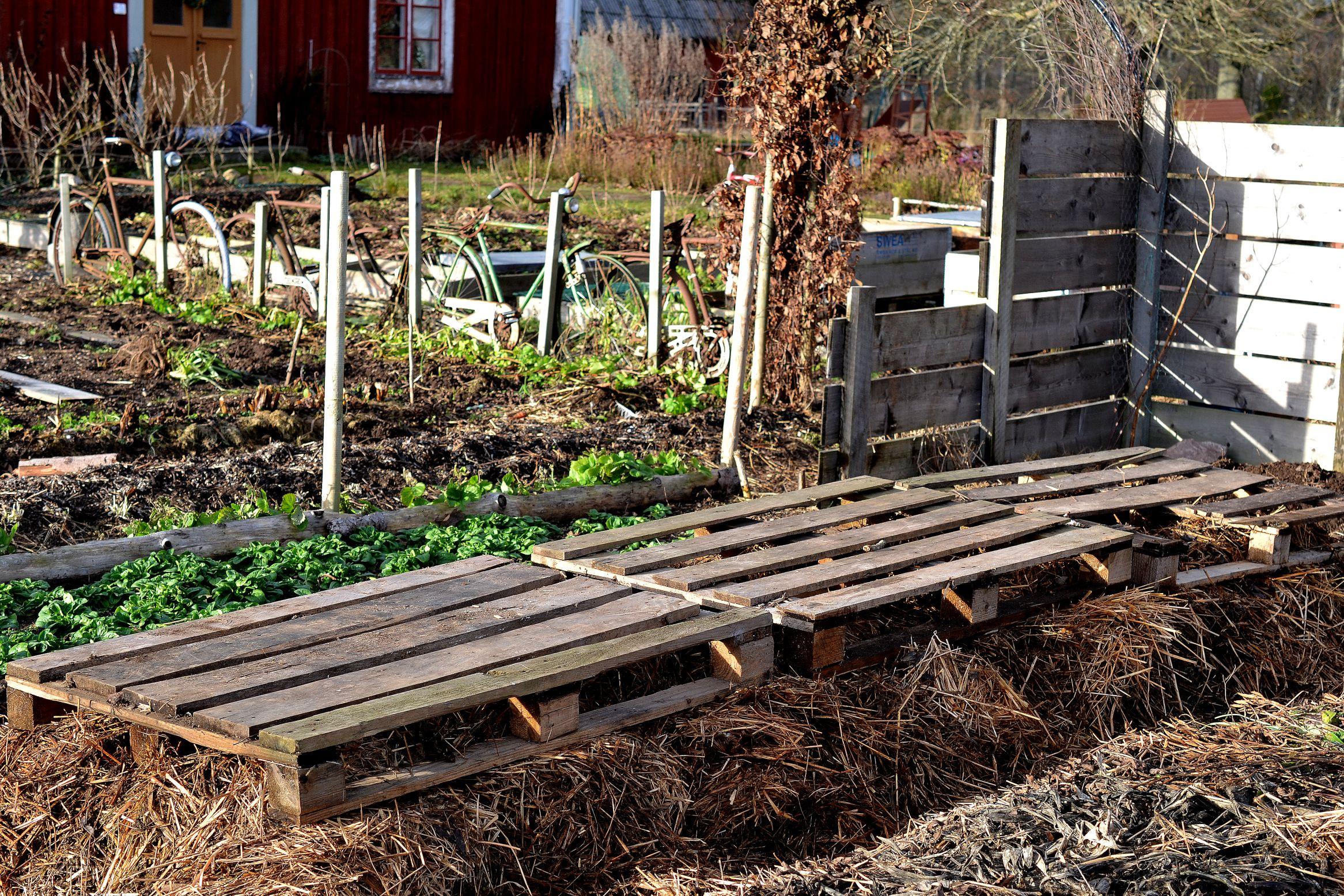 En täckt odlingsbädd där morötter förvaras över vintern.