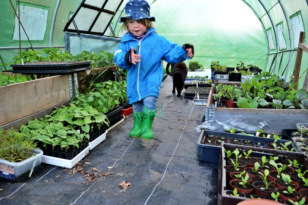 Många små plantor fyller marken i ett tunnelväxthus.