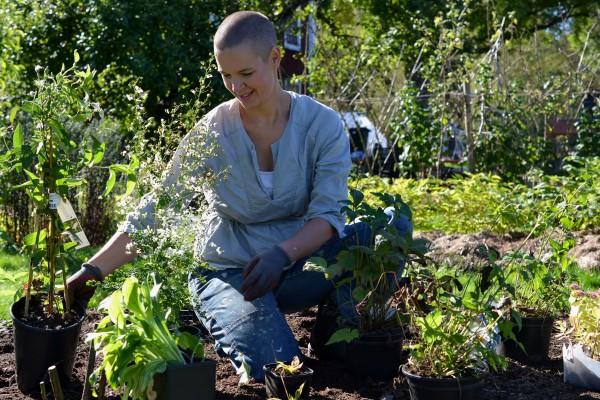 Sara planterar perenner.