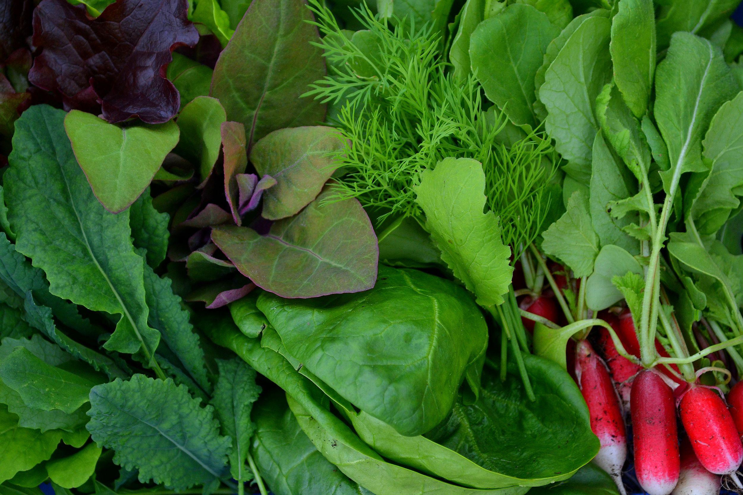 Bladgrönsaker och rädisa fyller ut hela bilden.