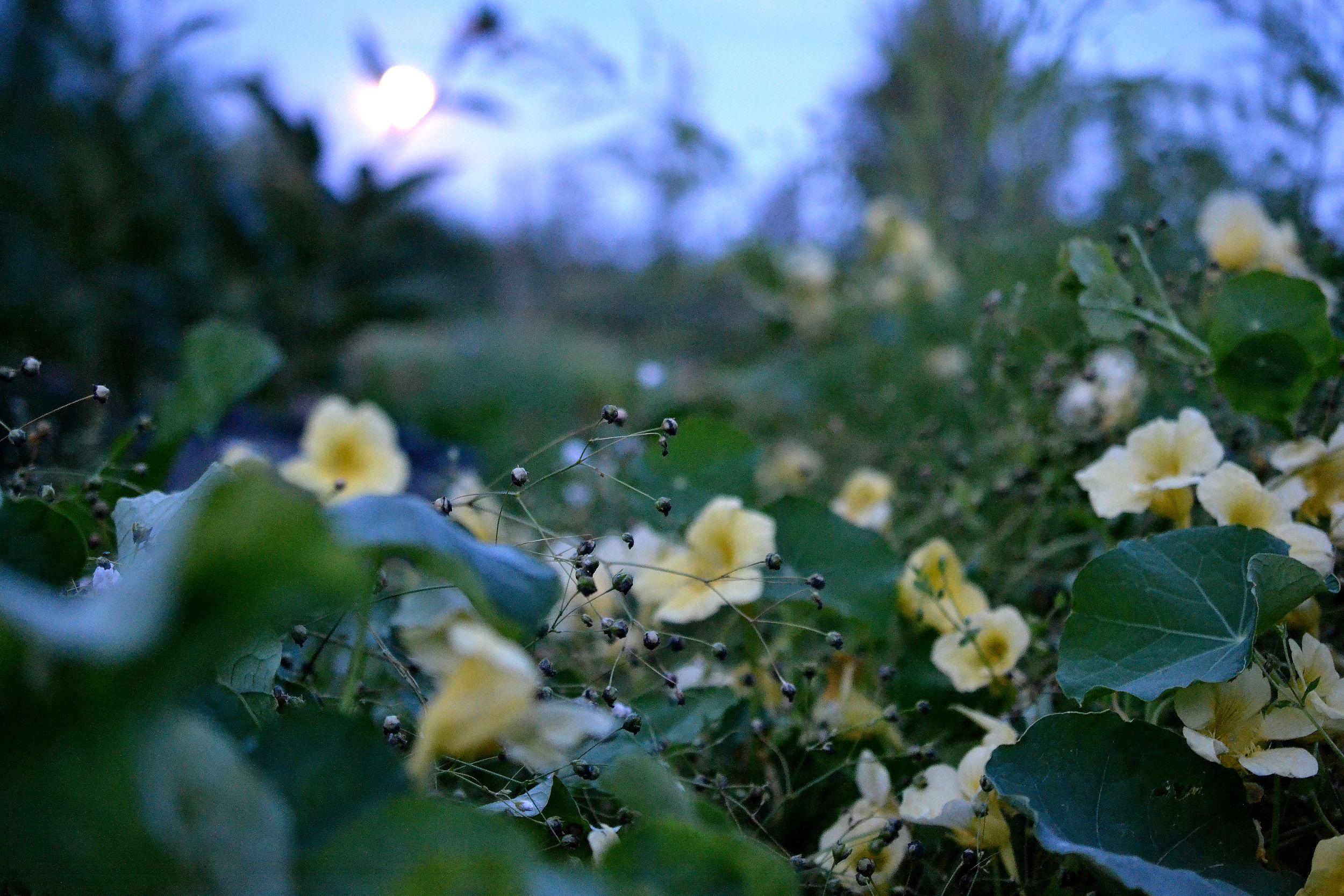 Skillnadens trädgård i månskensljus.