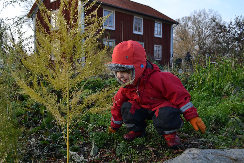 Ett litet barn i vinteroverall i köksträdgården.