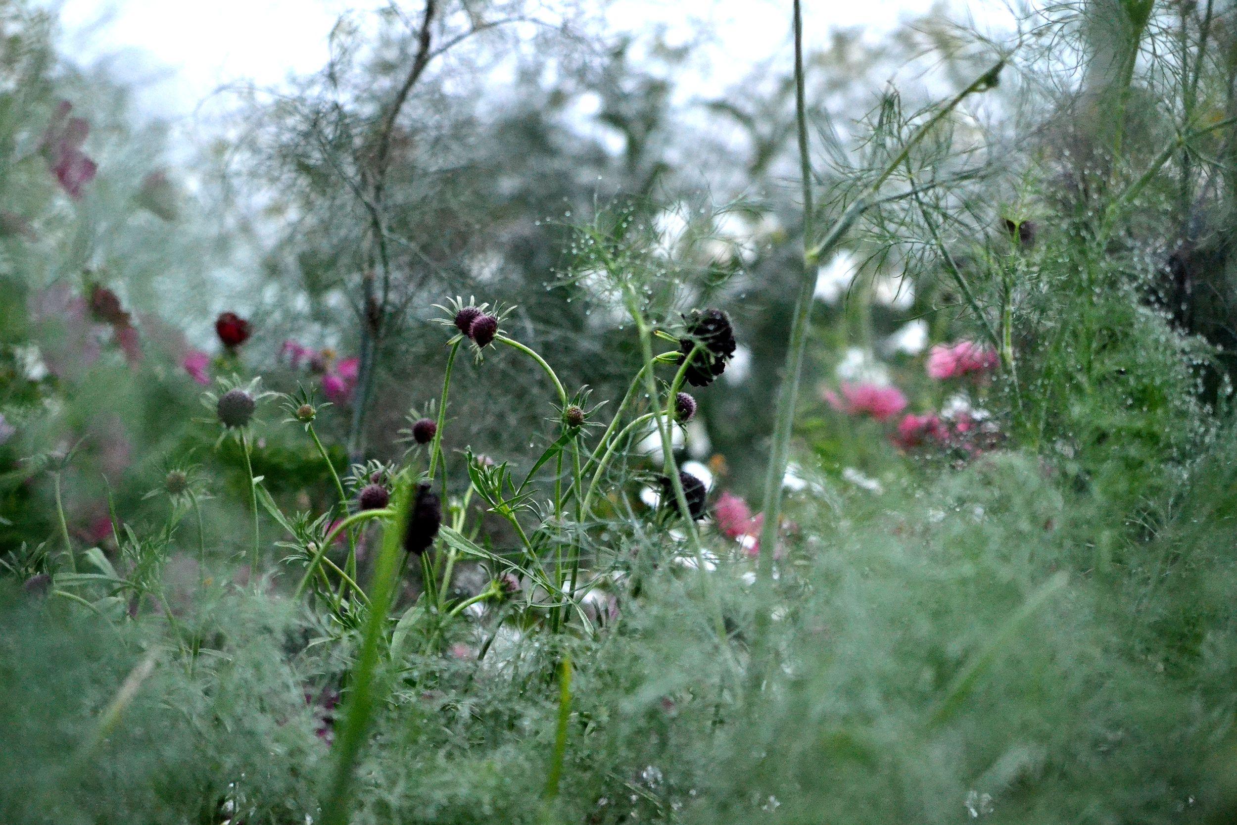Grönsaker och blommor i köksträdgården.