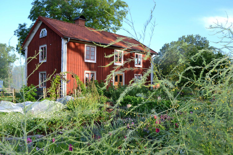 En vacker köksträdgård framför ett rött trähus.