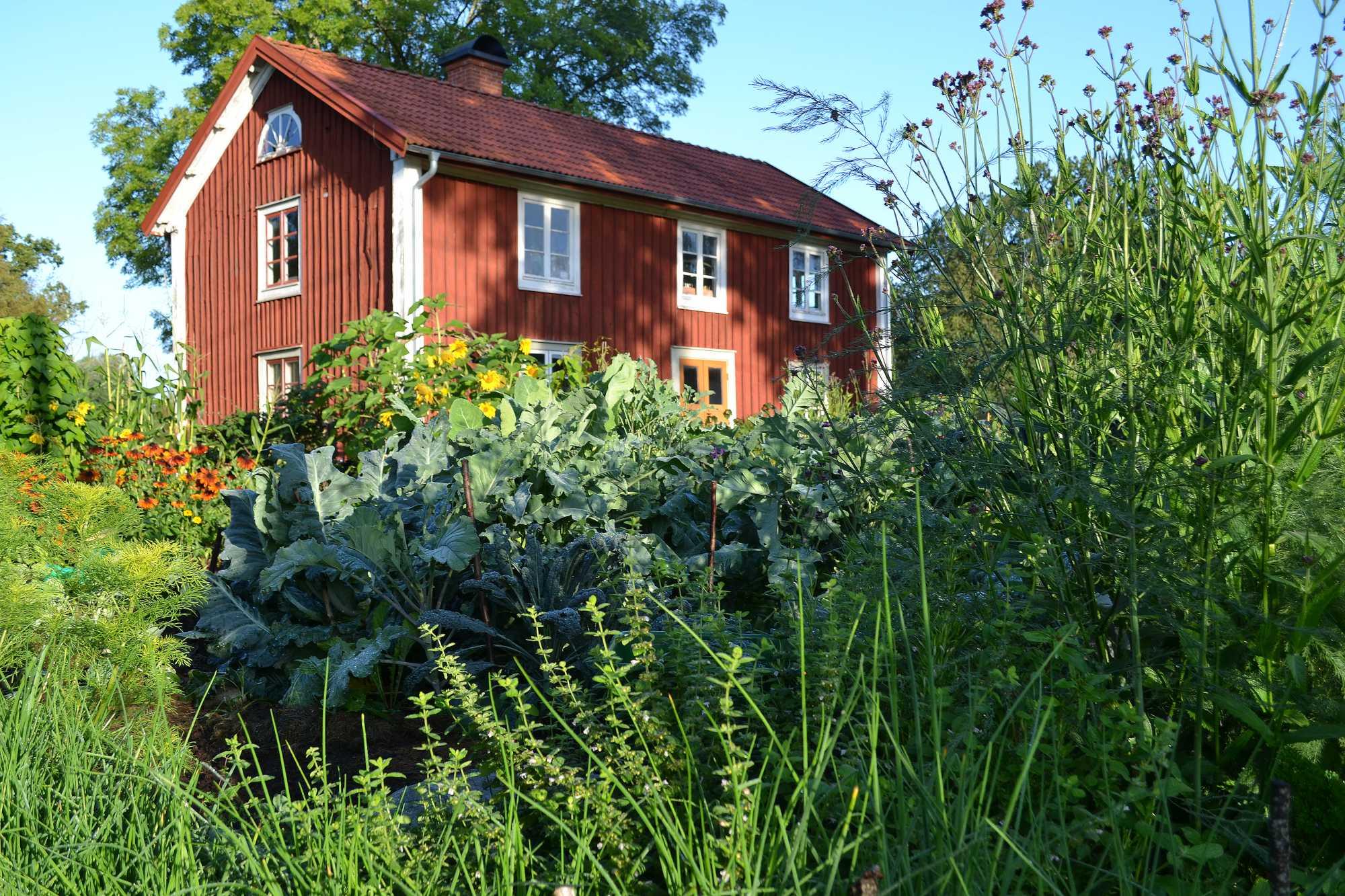 Köksträdgård framför rött parhus.
