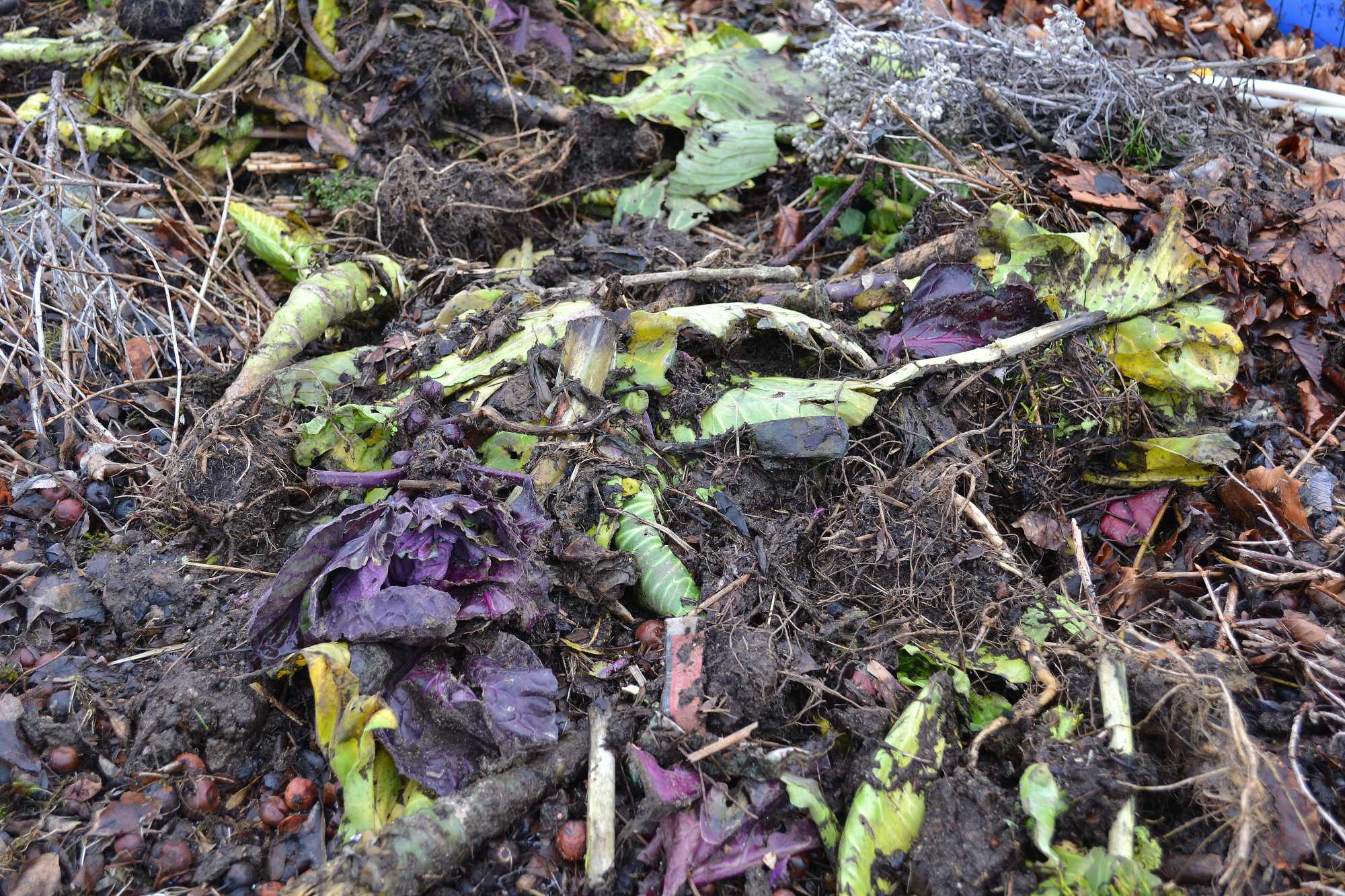 En jord med gamla rester av grönsaker och blad på.