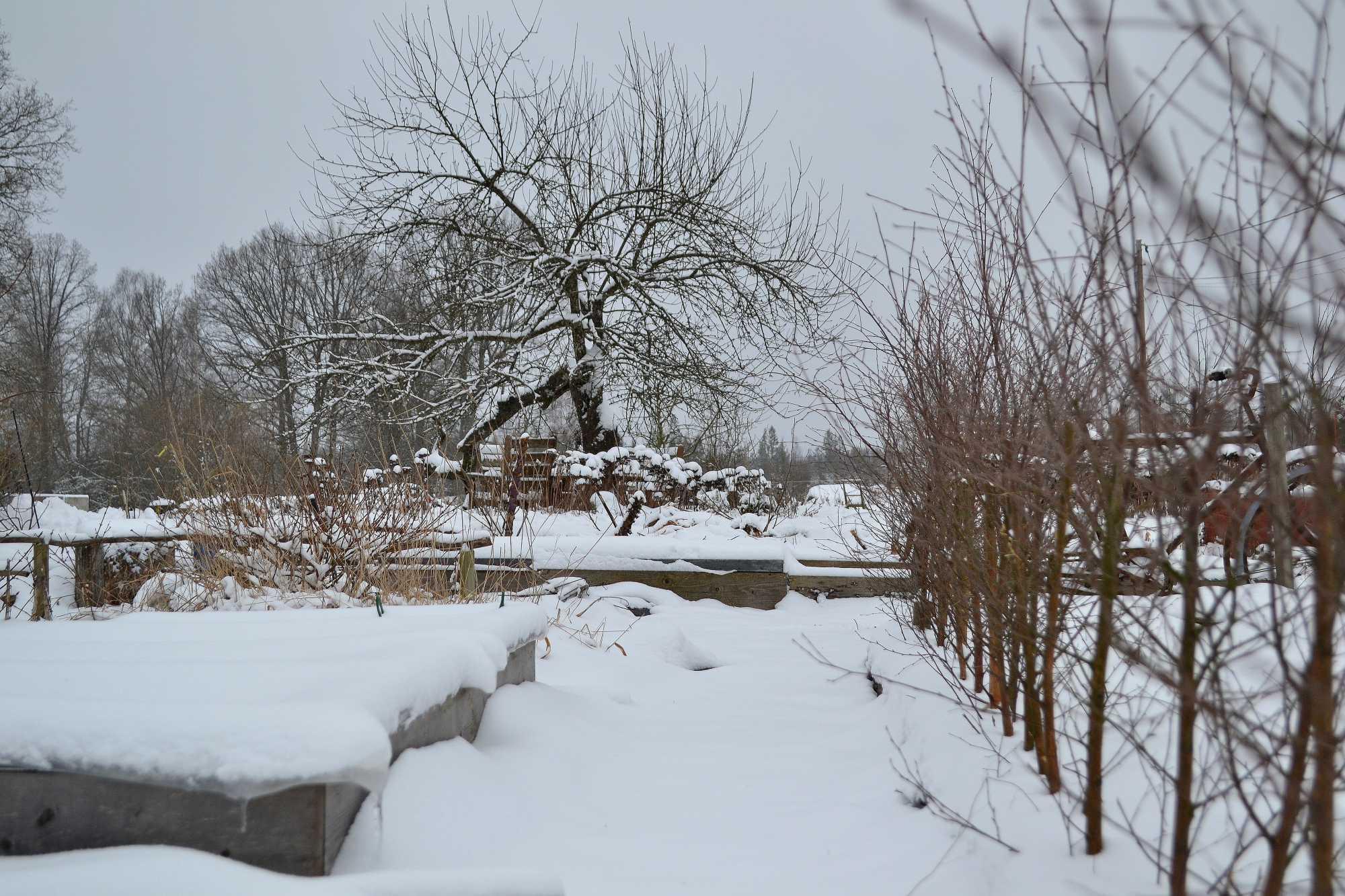 En köksträdgård i vinterskrud med mycket snö.