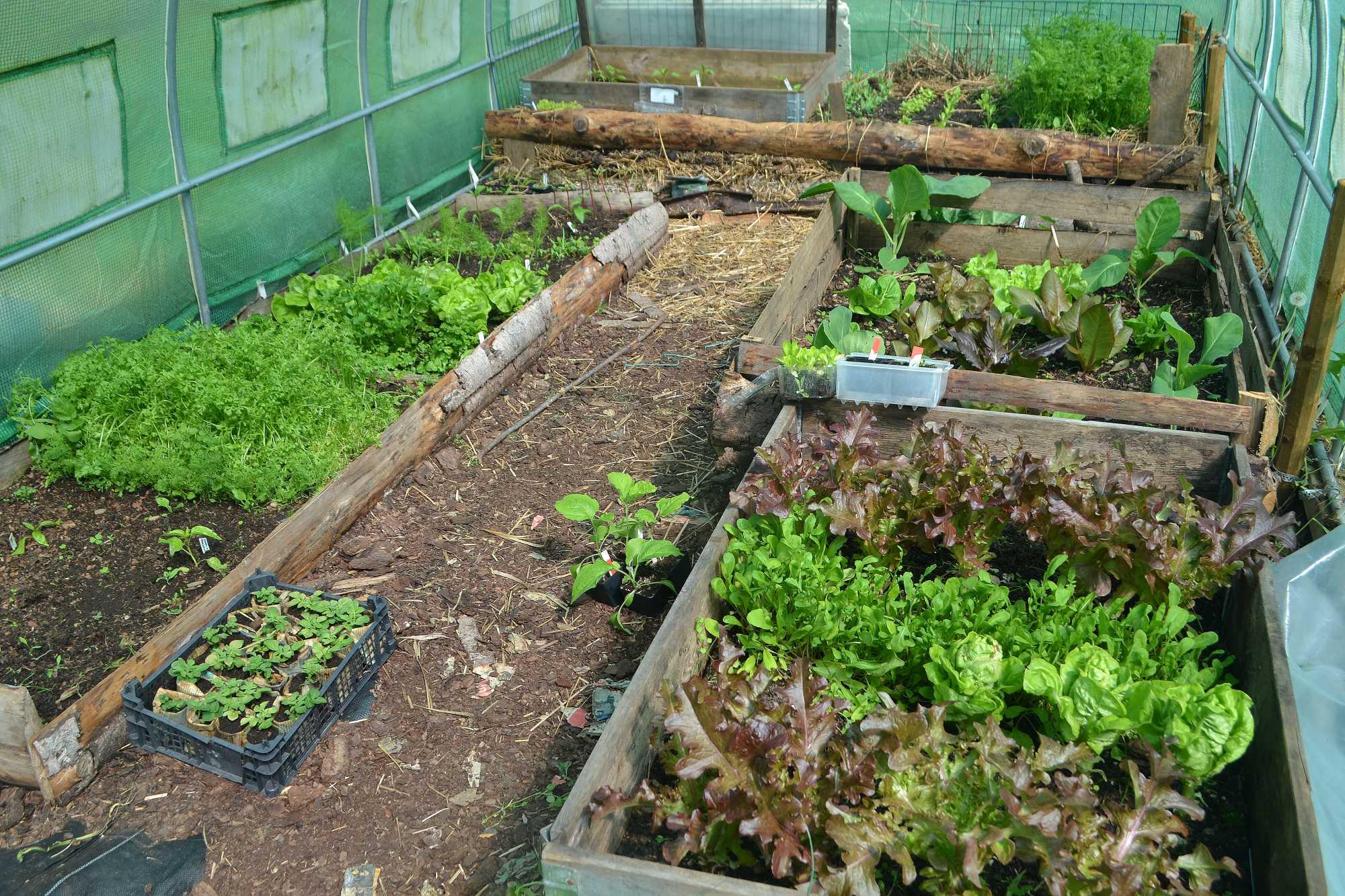 En grönskande tunnel i maj, med mängder av bladgrönsaker