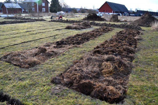 En ny köksträdgård med odlingsbäddar.