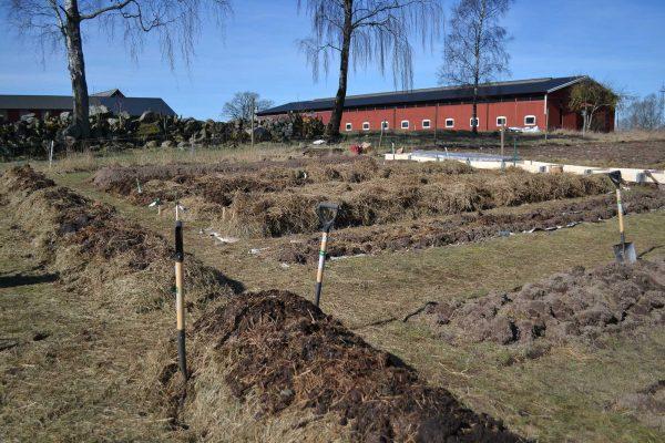 Blivande köksträdgård med odlingsbäddar.