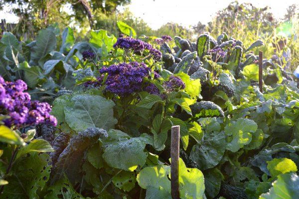 En färgglad plantering i motljus.