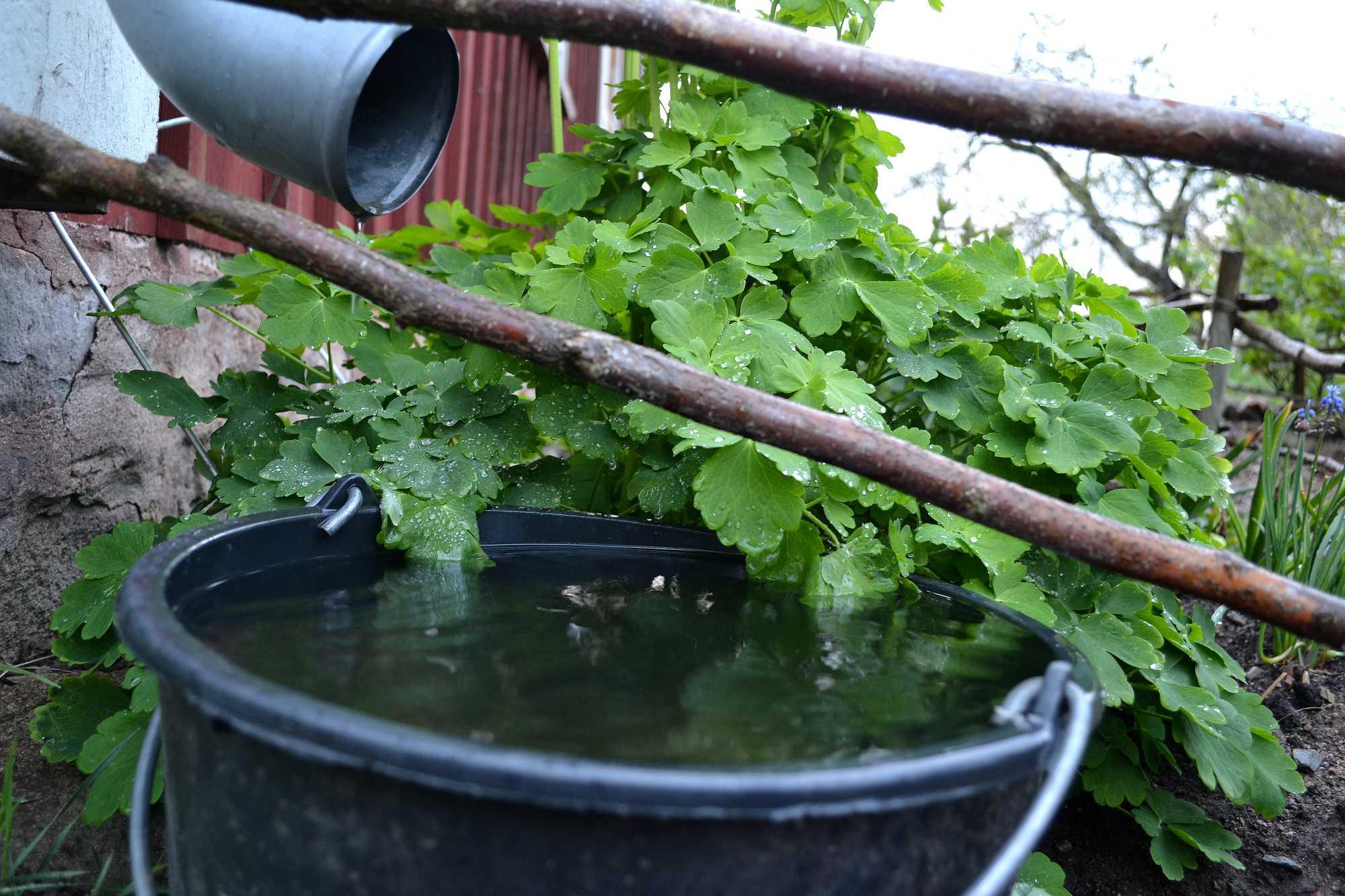 En hink med vatten under ett stuprör.