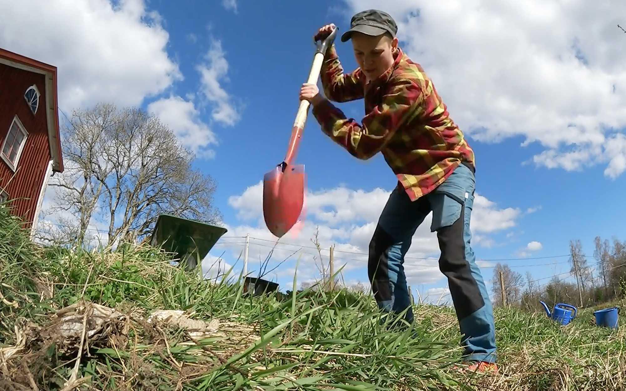 Sara gräver ett hål med spaden i högsta hugg.
