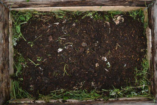 Jord och gräsklipp i komposten.