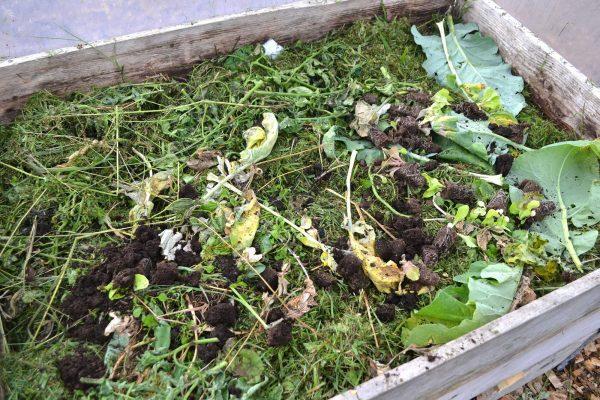 En kompost sedd från ovan.