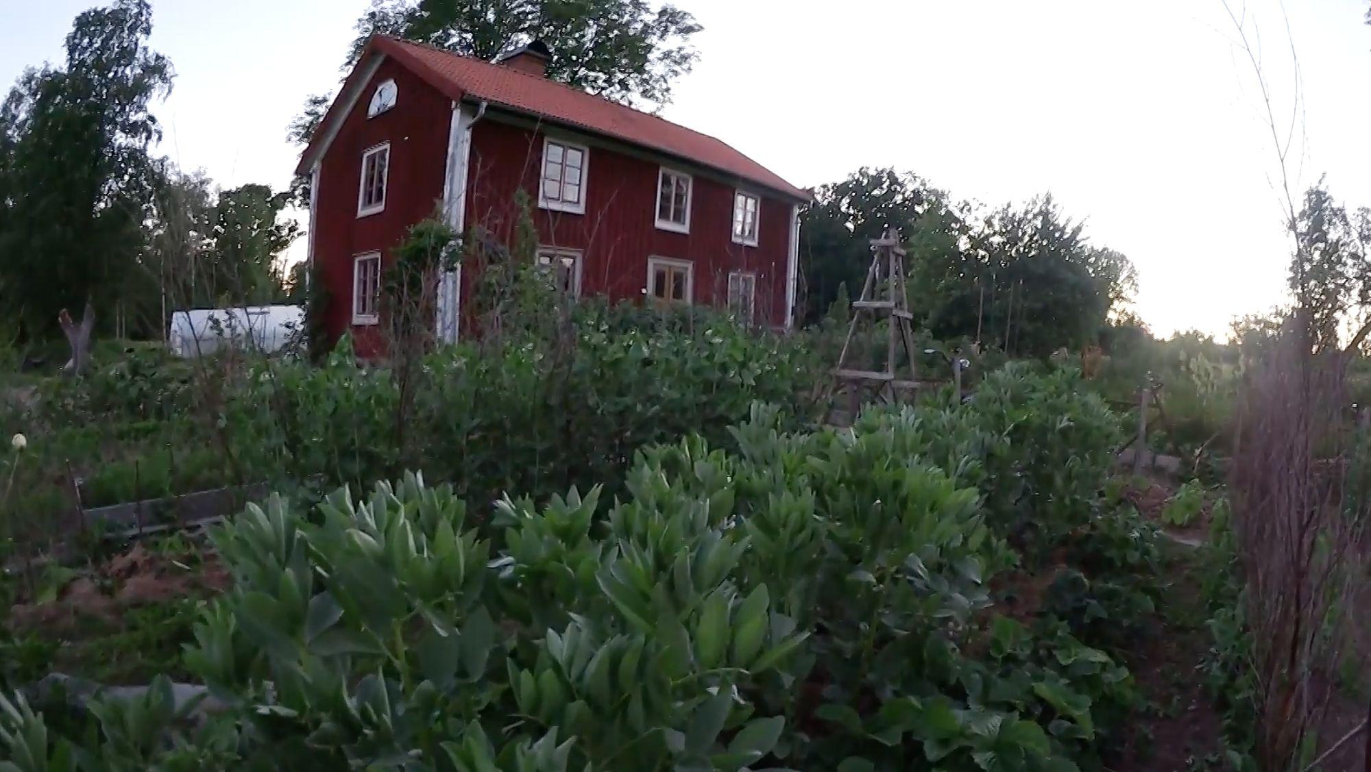 Köksträdgården i kvällsljus