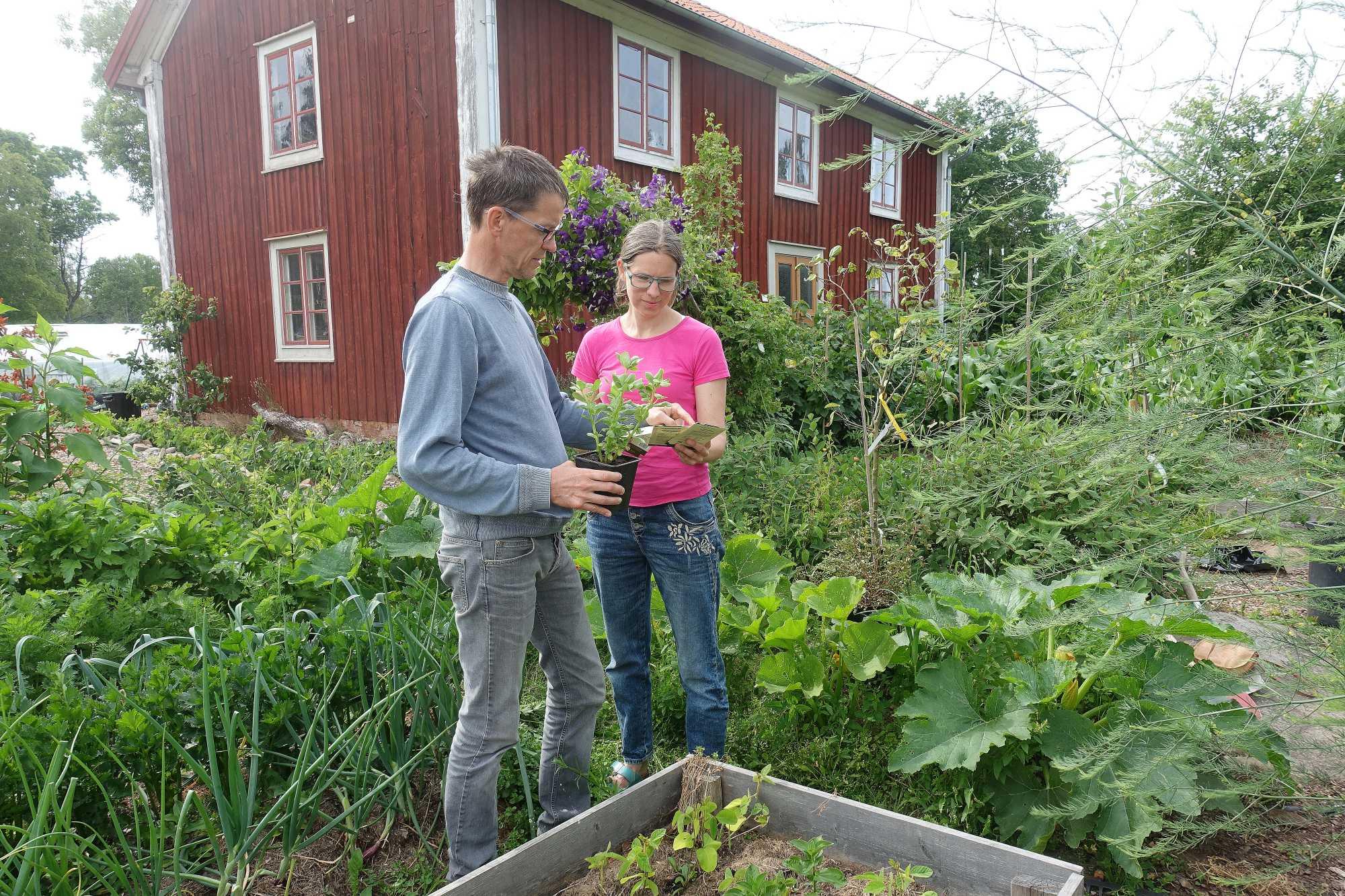 Ett par står i en köksträdgård.