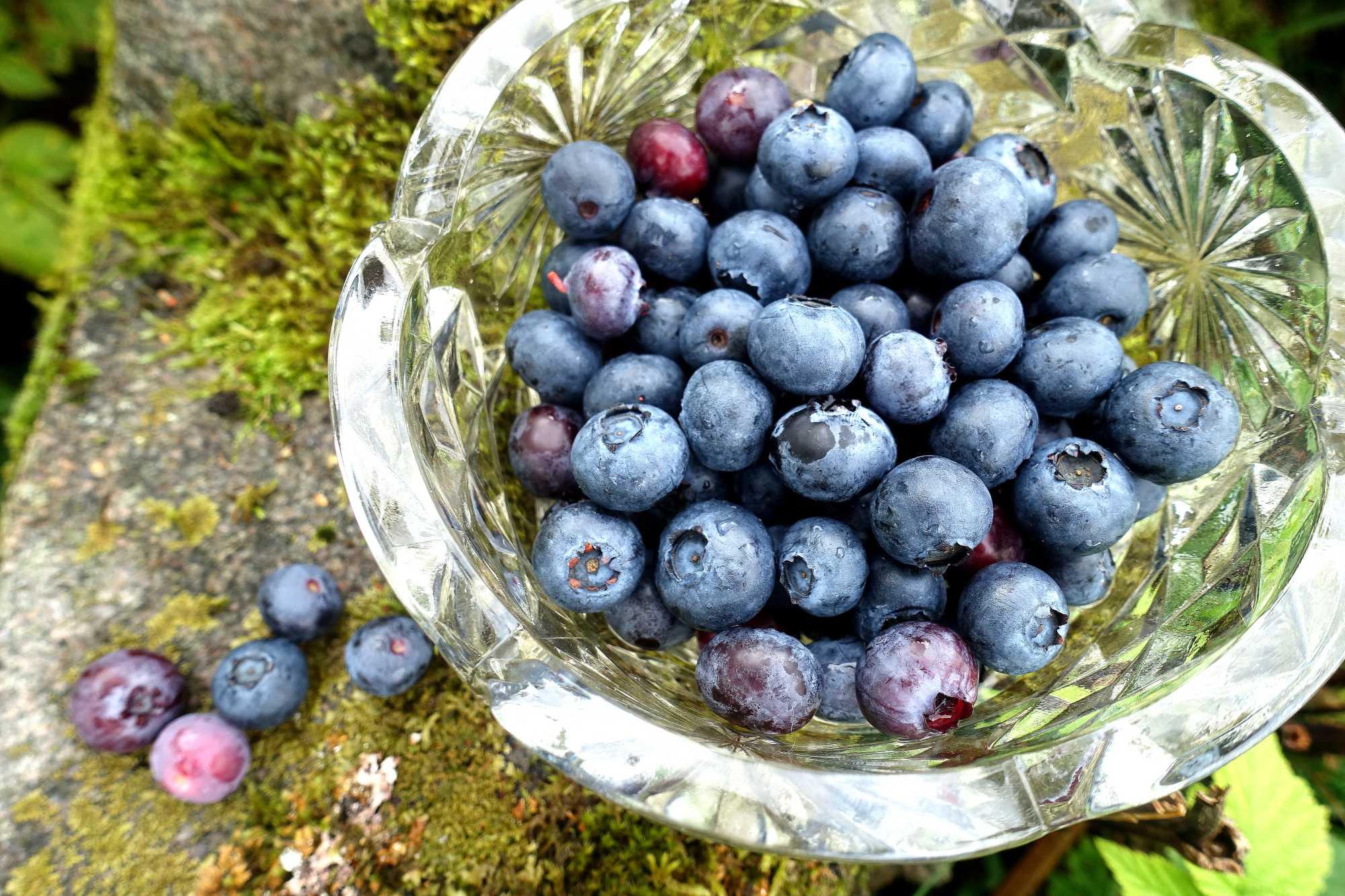 En skål med blåbär på en sten med mossa.