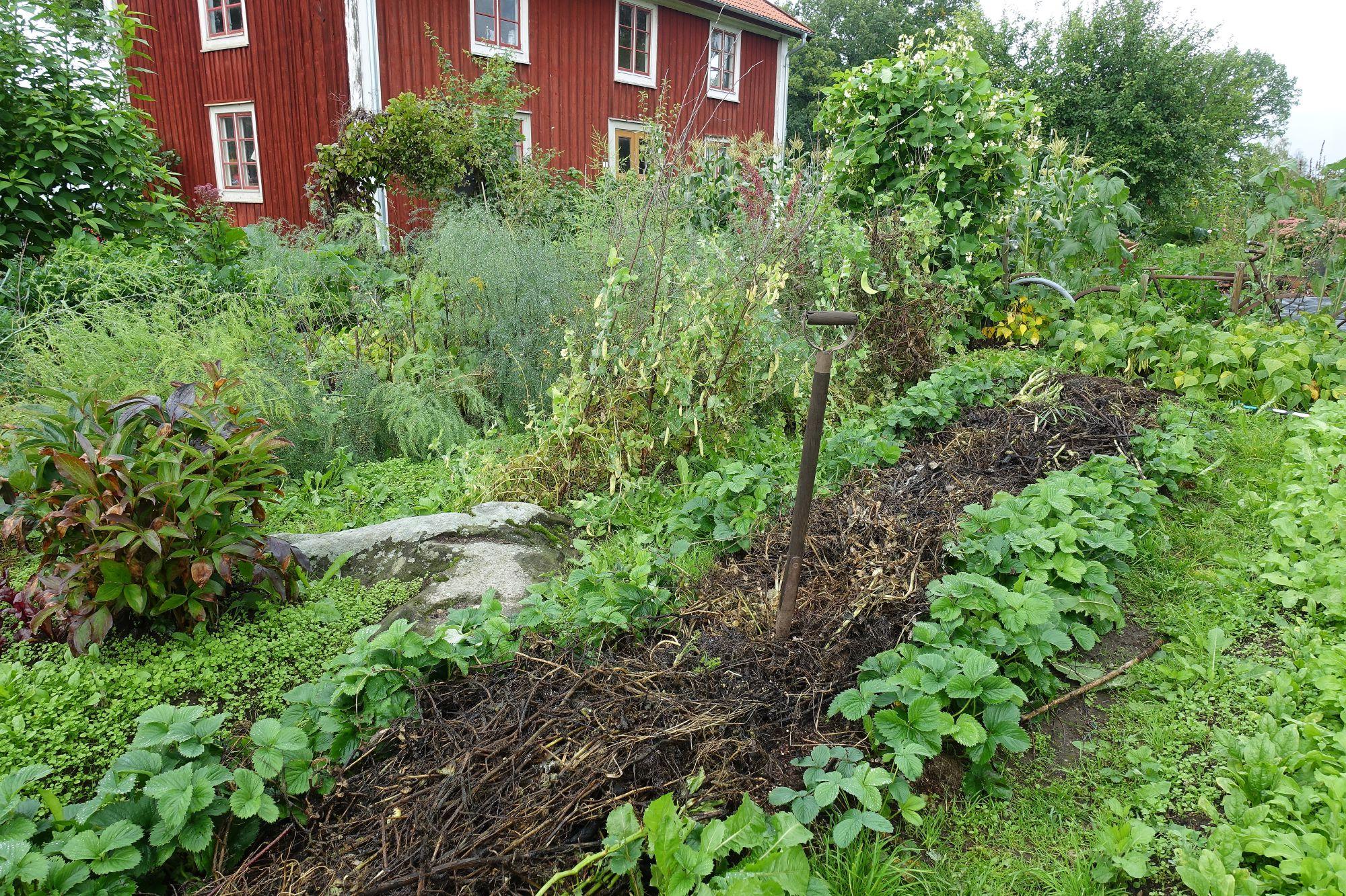 Täckodlad bädd i köksträdgården.