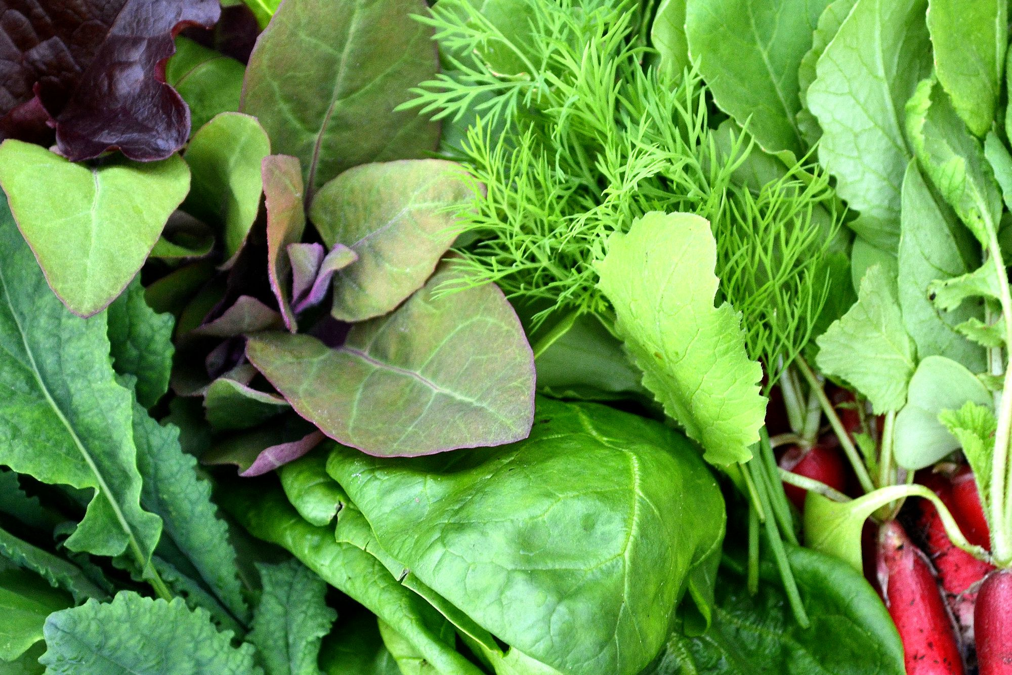 Blandade bladgrönsaker